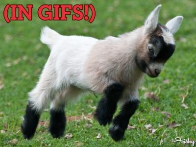 Baby Goat Gif Baby geitjes. zoo schattig!